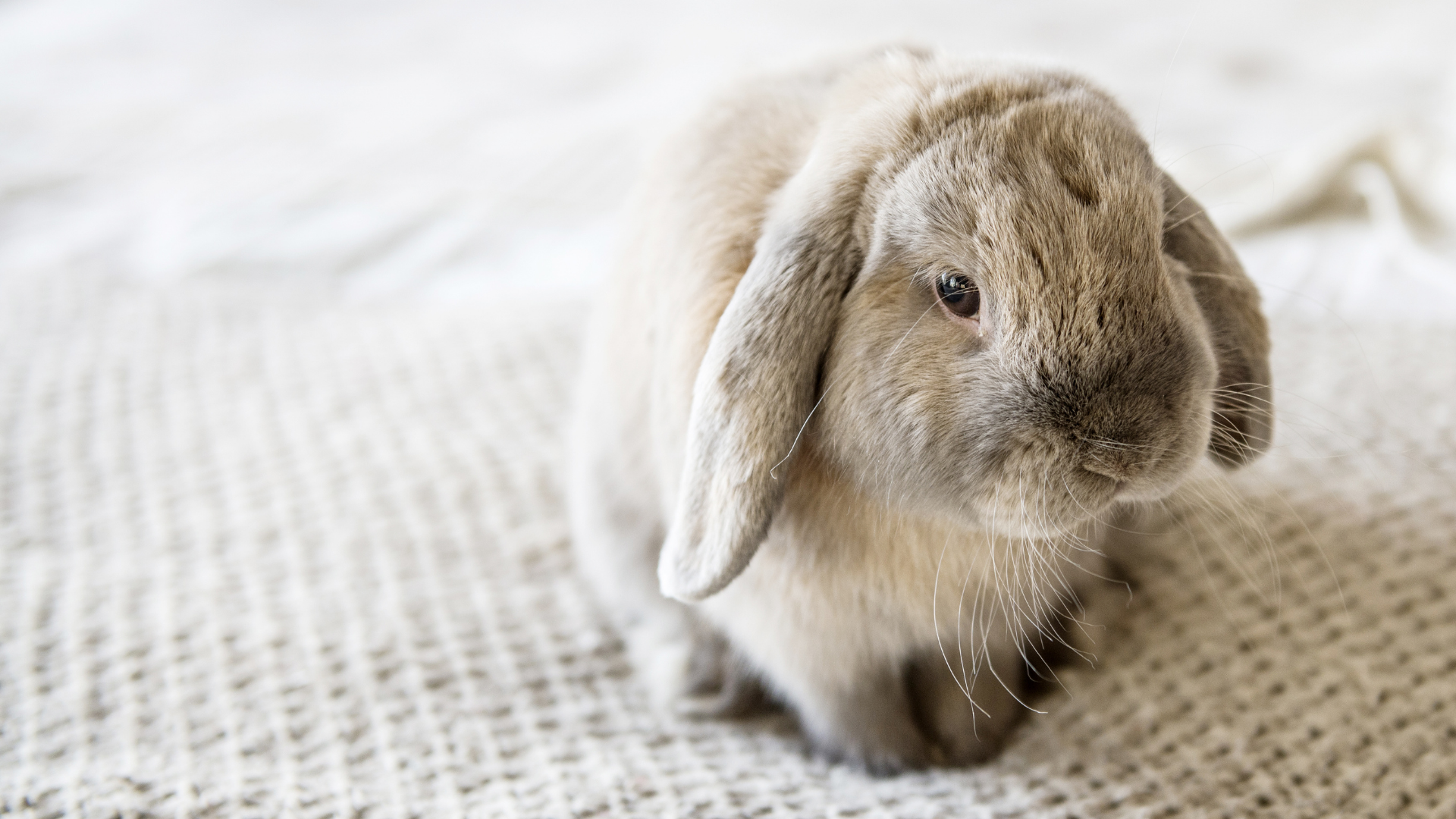 The Ultimate Bunny Guide